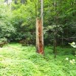 Der wilde Netzbachpfad