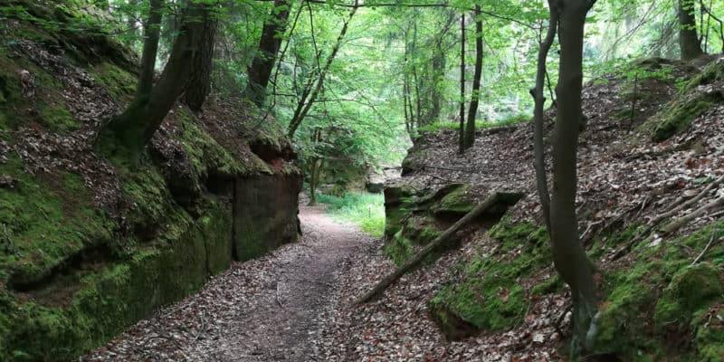 Steinhauerweg