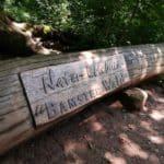 Bamster Wald