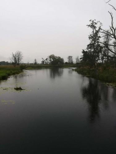 Polderlandschaft an der Oder